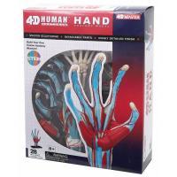 Пазл 4D Master Объемная анатомическая модель Рука человека Фото
